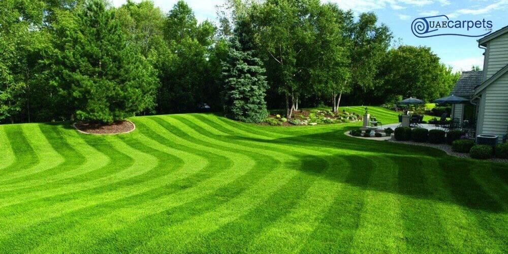 Landscaping-Grass